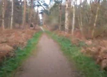 Track Through Rendlesham Forest